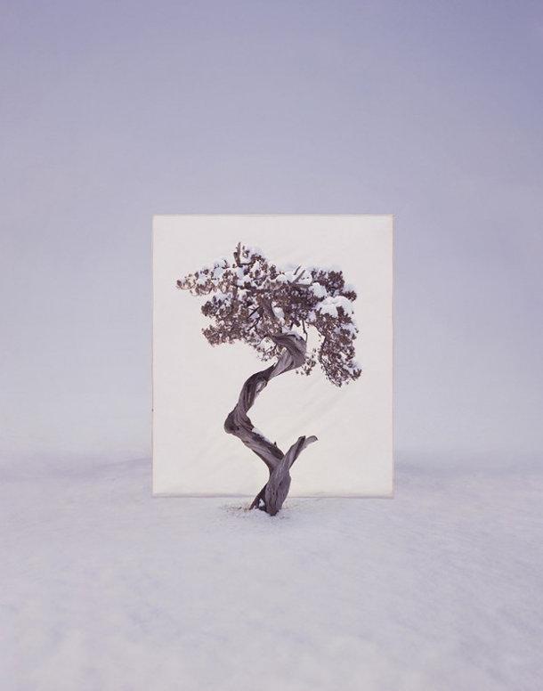 foto-serie-portretten-bomen-5