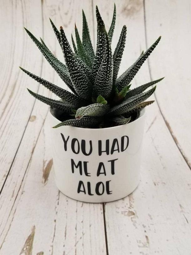 grappige-kleine-plantenpotten-3