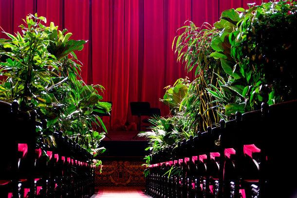 openingsvoorstelling-planten